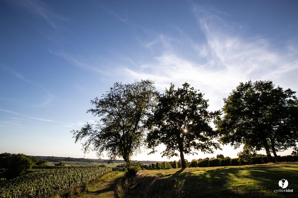 Landes qualité tursan vin sudouest
