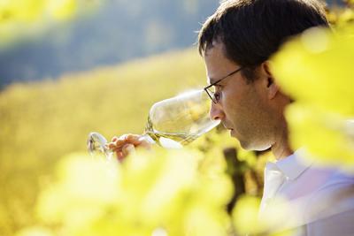 tursan vin qualite